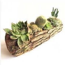 Gerçek uzun kütük içerisinde 7 adet kaktüs  Tokat güvenli kaliteli hızlı çiçek