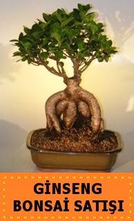 Ginseng bonsai satışı japon ağacı  Tokat çiçek yolla