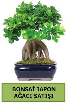 Bonsai japon ağacı satışı  Tokat hediye sevgilime hediye çiçek