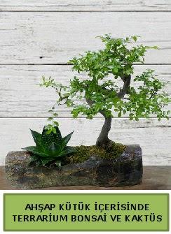Ahşap kütük bonsai kaktüs teraryum  Tokat çiçek yolla , çiçek gönder , çiçekçi