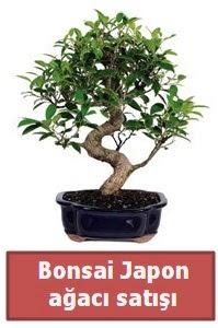Japon ağacı bonsai satışı  Tokat güvenli kaliteli hızlı çiçek
