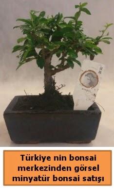 Japon ağacı bonsai satışı ithal görsel  Tokat uluslararası çiçek gönderme