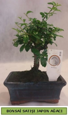 Minyatür bonsai ağacı satışı  Tokat 14 şubat sevgililer günü çiçek