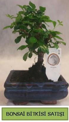 Bonsai ithal görsel minyatür japon ağacı  Tokat çiçek servisi , çiçekçi adresleri
