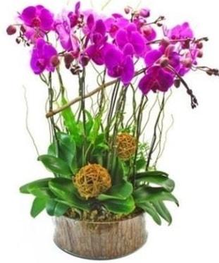 Ahşap kütükte lila mor orkide 8 li  Tokat yurtiçi ve yurtdışı çiçek siparişi