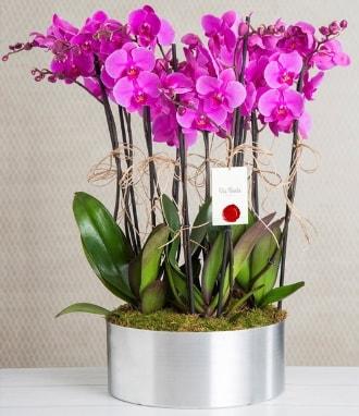 11 dallı mor orkide metal vazoda  Tokat cicekciler , cicek siparisi