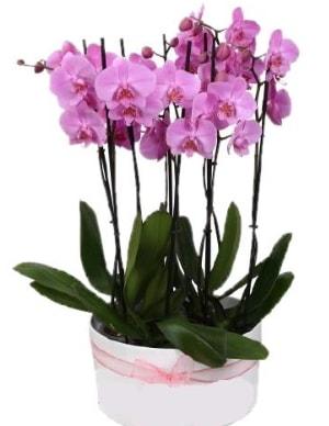 Beyaz seramik içerisinde 7 dallı mor orkide  Tokat anneler günü çiçek yolla