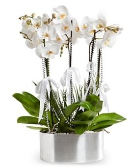 Beş dallı metal saksıda beyaz orkide  Tokat uluslararası çiçek gönderme
