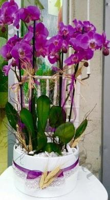 Seramik vazoda 4 dallı mor lila orkide  Tokat çiçek gönderme sitemiz güvenlidir