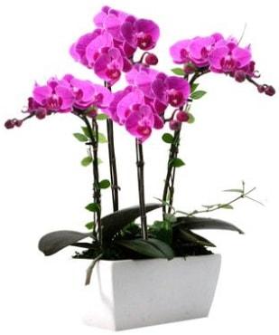 Seramik vazo içerisinde 4 dallı mor orkide  Tokat hediye sevgilime hediye çiçek