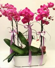 Beyaz seramik içerisinde 4 dallı orkide  Tokat çiçek servisi , çiçekçi adresleri