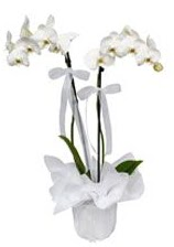 2 dallı beyaz orkide  Tokat çiçekçiler