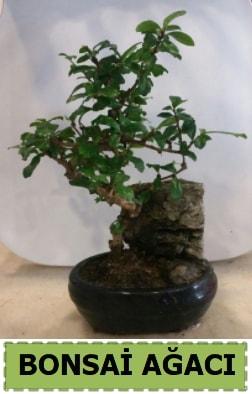 Bonsai ağacı japon ağacı satışı  Tokat çiçek mağazası , çiçekçi adresleri
