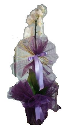 Tek dallı beyaz orkide süper kalite ithal  Tokat güvenli kaliteli hızlı çiçek