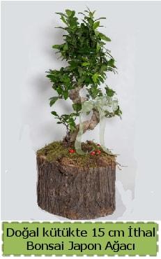 Doğal kütükte İthal bonsai japon ağacı  Tokat 14 şubat sevgililer günü çiçek