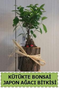 Kütük içerisinde doğal bonsai ağacı  Tokat anneler günü çiçek yolla