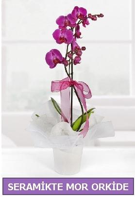 Seramik içerisinde birinci kalite tek dallı mor orkide  Tokat cicek , cicekci