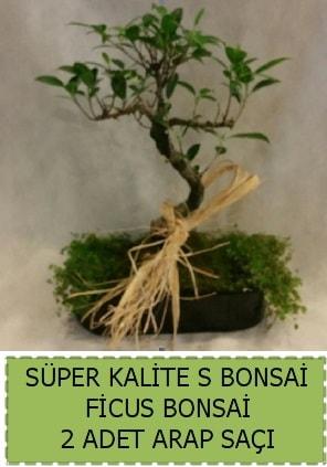 Ficus S Bonsai ve arap saçı  Tokat anneler günü çiçek yolla