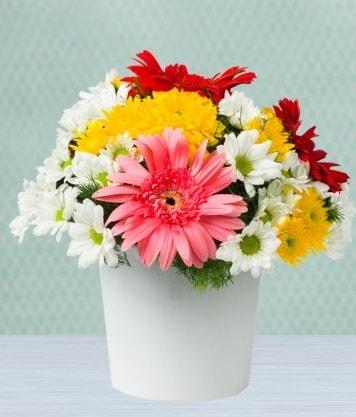 Seramik Vazoda Gelbera ve Papatya  Tokat 14 şubat sevgililer günü çiçek