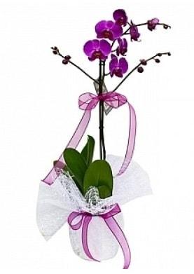 Tekli Mor Orkide  Tokat uluslararası çiçek gönderme