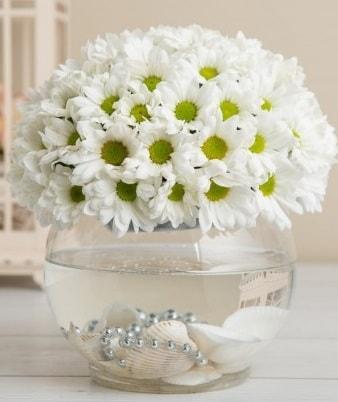 Fanusta beyaz Papatya  Tokat hediye sevgilime hediye çiçek