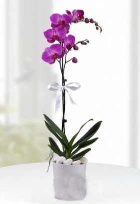 Tek dallı saksıda mor orkide çiçeği  Tokat online çiçekçi , çiçek siparişi