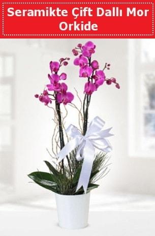 Seramikte Çift Dallı Mor Orkide  Tokat çiçek , çiçekçi , çiçekçilik
