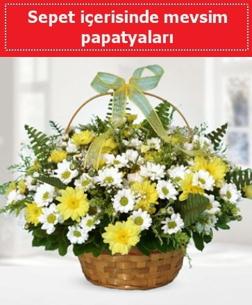 Sepet içerisinde mevsim papatyaları  Tokat çiçek servisi , çiçekçi adresleri